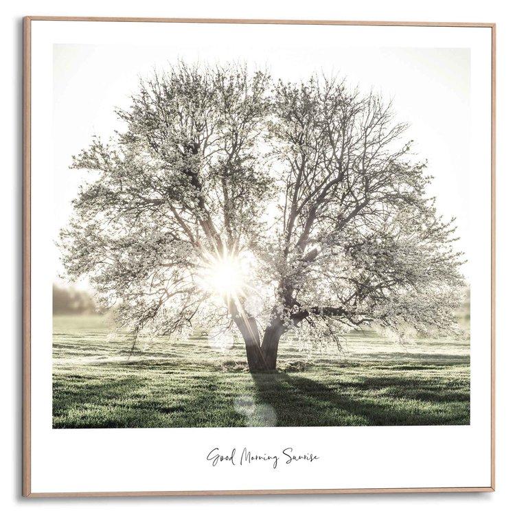 Ochtendzon Boom - Dauw - Zonnestralen  - Schilderij Slim Frame 50 x 50 cm MDF