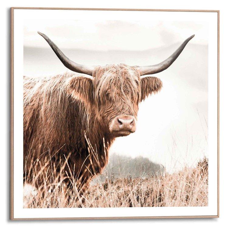 Hooglander Hoorns - Koe - Heide - Schilderij Slim Frame 50 x 50 cm MDF