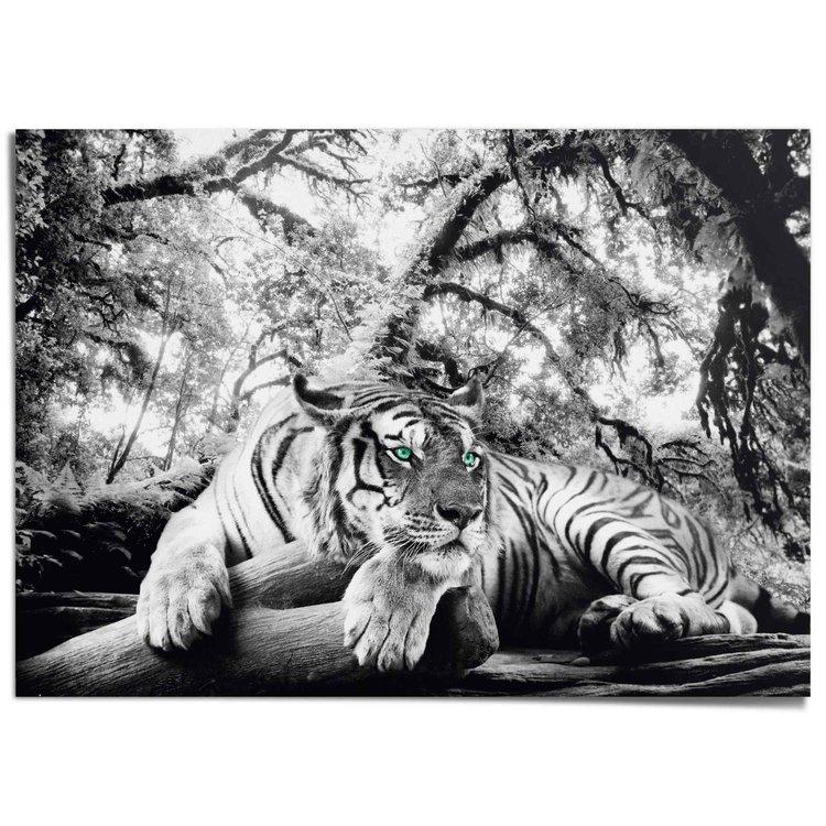 Tijger Dieren - Jungle - Bos - Natuur - XXL Poster 140 x 100 cm
