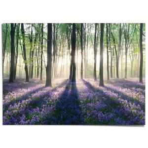 XXL Poster Voorjaar in het bos