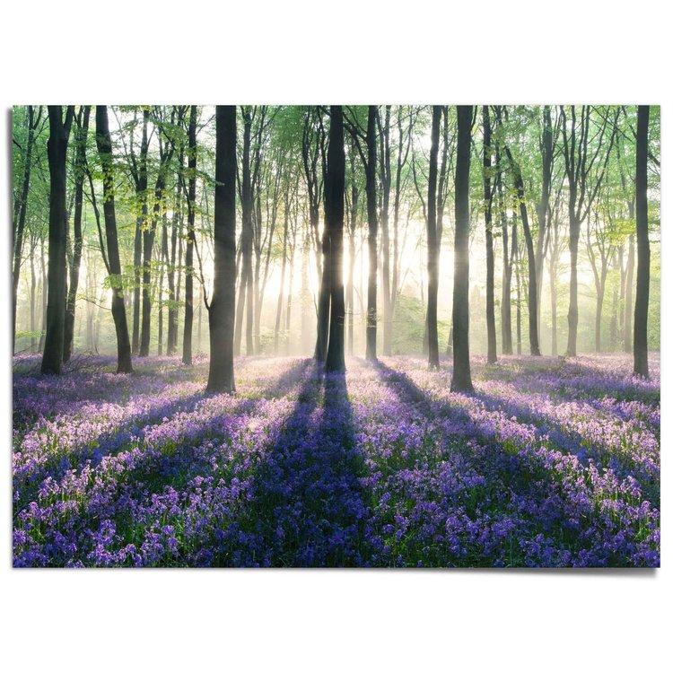 Voorjaar in het bos Bloemen - Bomen - Zon - Natuur - XXL Poster 140 x 100 cm