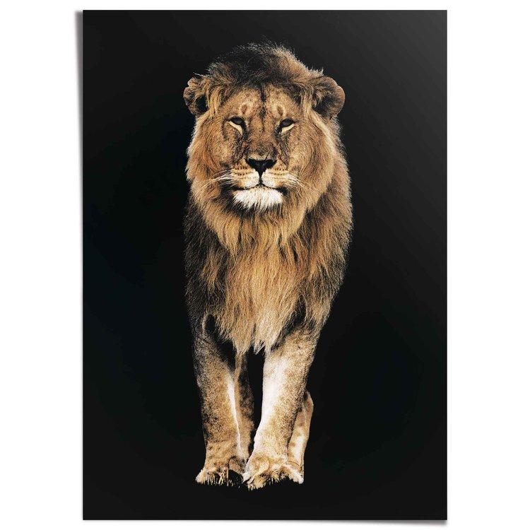 Leeuw - XXL Poster 100 x 140 cm