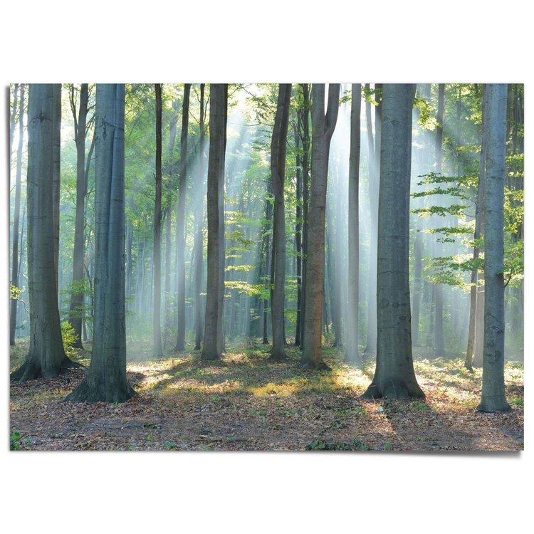 Zonlicht in Bos Bomen - Zonnestralen - Natuur - Bos - XXL Poster 140 x 100 cm