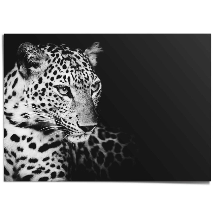 Luipaard Donker - Portret - Panter - XXL Poster 140 x 100 cm