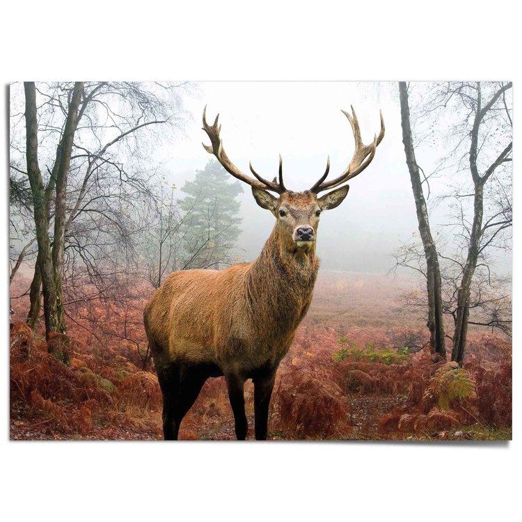 Hert in herfstbos  Dieren - Bos - Gewei - Natuur - XXL Poster 140 x 100 cm