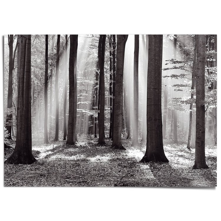 Zonlicht in loofbos Herfst - zonnestralen - rust - XXL Poster 140 x 100 cm
