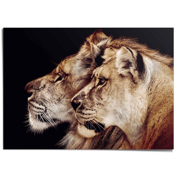 Leeuw en leeuwin Roofdieren - Leeuwenkop - Portret - XXL Poster 140 x 100 cm
