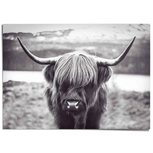 XXL Poster Schotse Hooglander
