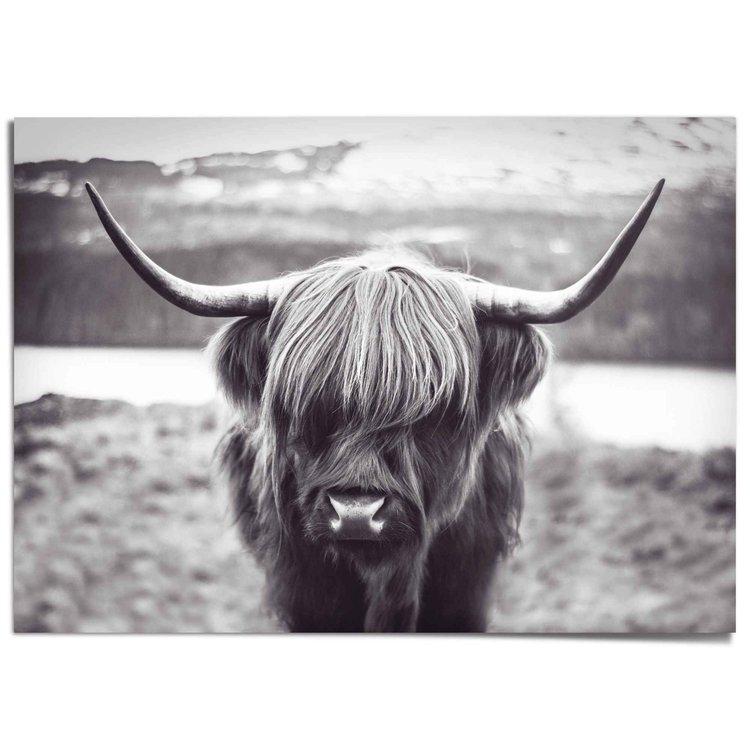 Schotse Hooglander Krachtig - Rund - Hoorns - Stier - XXL Poster 140 x 100 cm