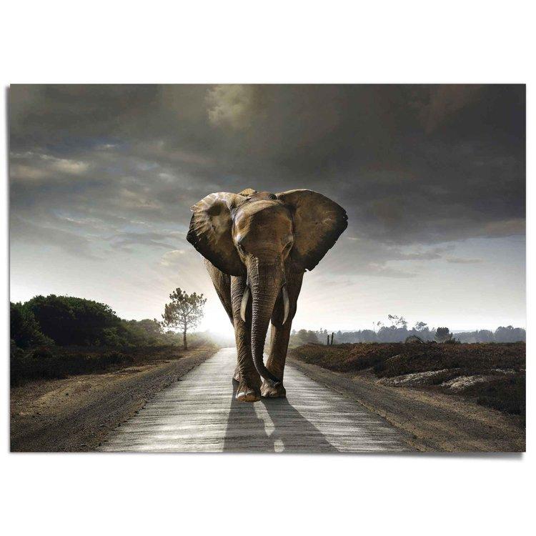 Wandelende olifant Afrika - Azië - Natuur - XXL Poster 140 x 100 cm