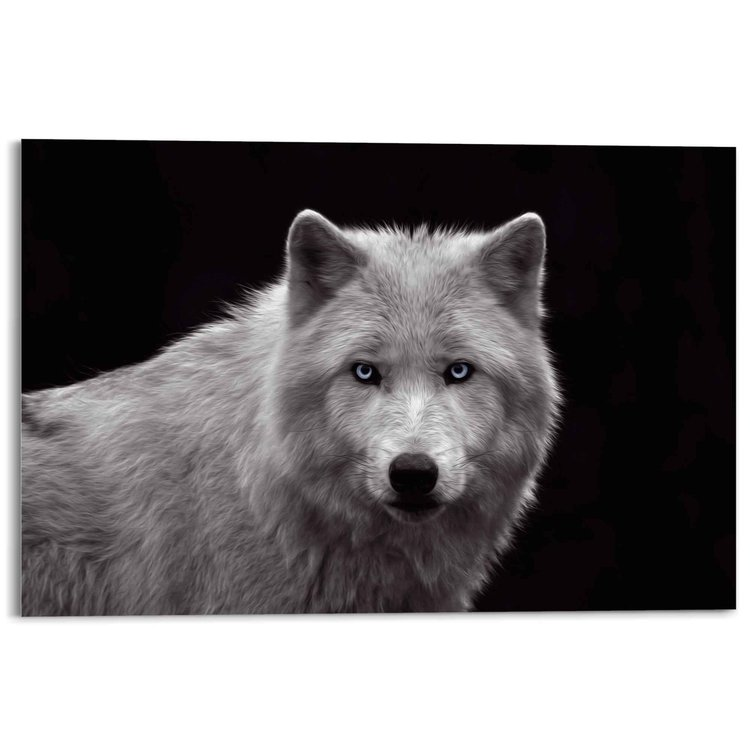 Witte wolf Natuur - Roofdier - Fotografie - Portret - Acrylglas 120 x 80 cm Plexiglas