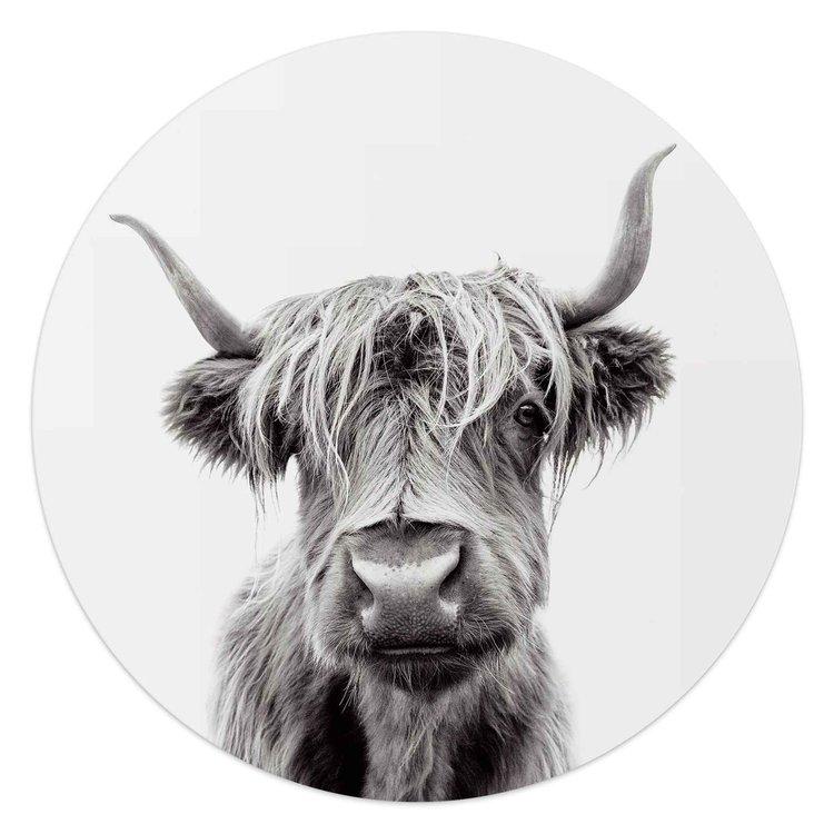 Schotse Hooglander Natuur - Portret - Highlander - Acrylglas  Ø50 Plexiglas