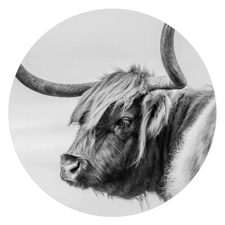 Schotse Hooglander Krachtig - Rund - Hoorns - Stier  - Acrylglas  Ø70 Plexiglas