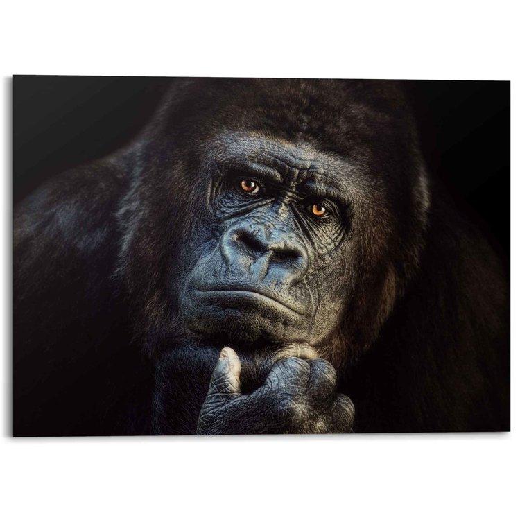 Gorilla Aap - Krachtig - Bedachtzaam  - Alu-Dibond Aluminium