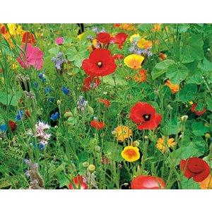 Ten Have Fleurs sauvage, mélange, annuel et pluriannuel, 250 grammes