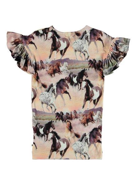 Molo Coralie wild horses