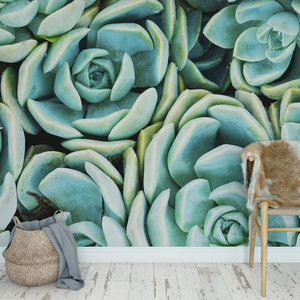 Behang Cactus & Succulents - 1