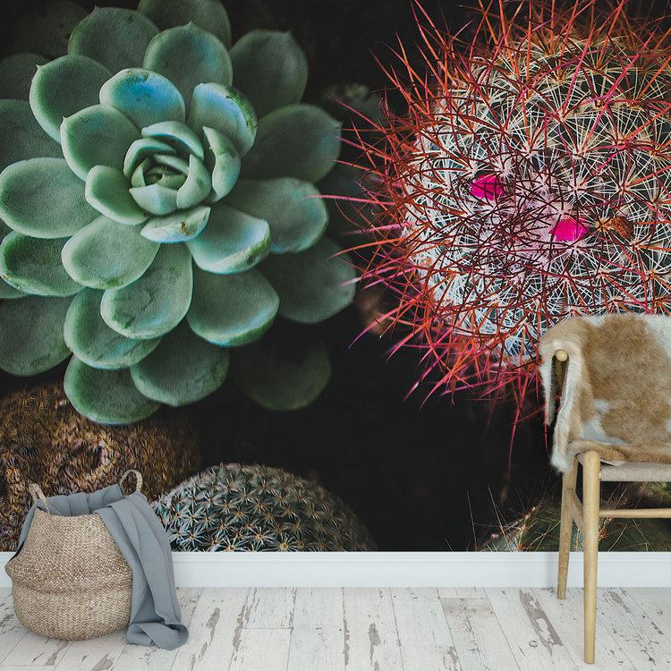 Behang Cactus & Succulents - 3
