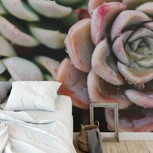 Behang Cactus & Succulents - 2