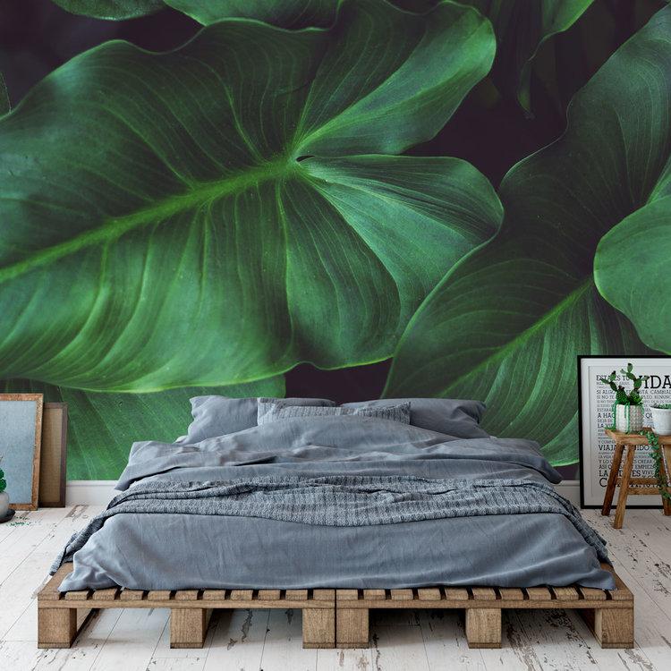 Behang Tropical leaves - 1
