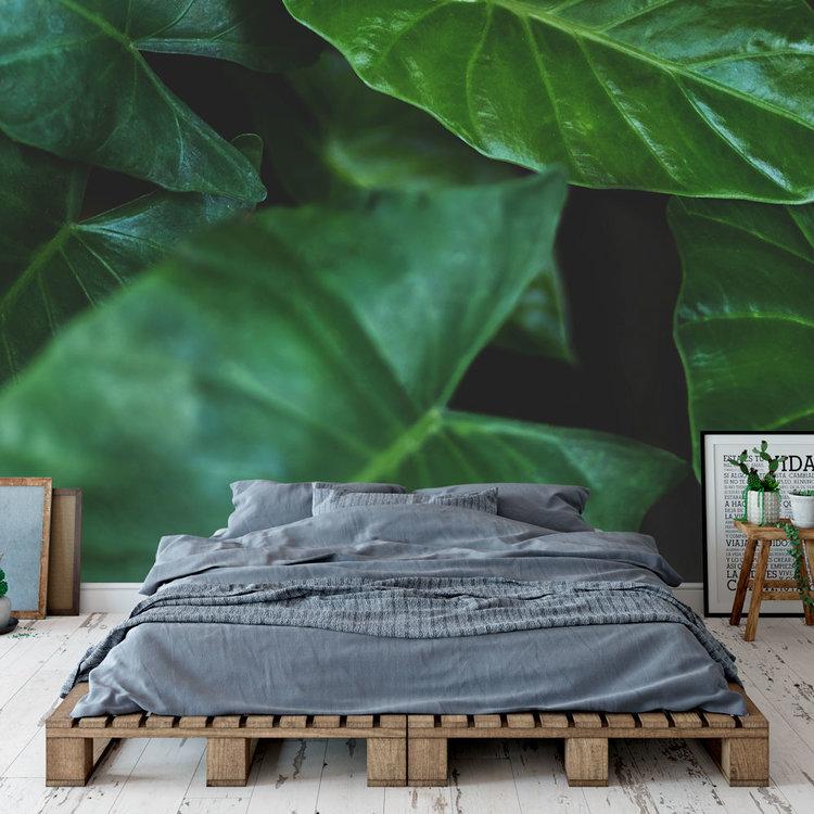 Behang Tropical leaves - 4