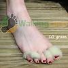 Walkingland VoetWol  - Stop Blaren 10 Gram