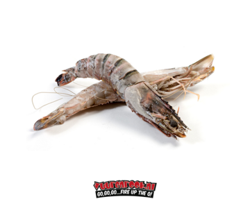 Box of Wild Giant Gambas / Sea Tigers 0.8/1kg 21-30 pieces