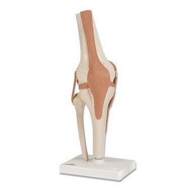 Kniegewricht Luxe op statief A82/1