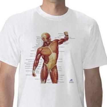 T-shirt Musculature XL W41013