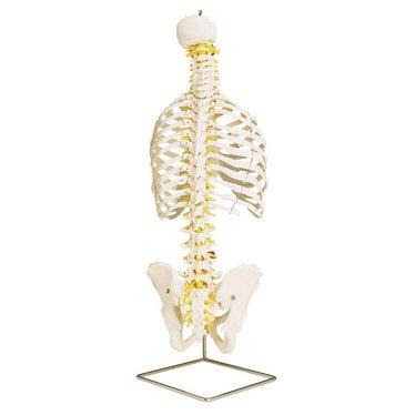 Spine + ribs Classic flexibel A56/2