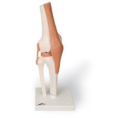 Kniegewricht op statief A82