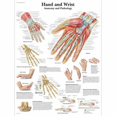3B Scientific Poster Hand and Wrist