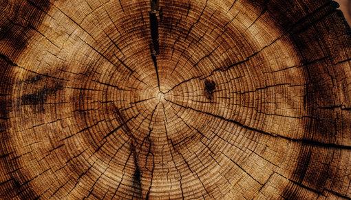 Schönes aus der Holzwelt