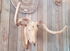 Koe met Sigaar XL - hout