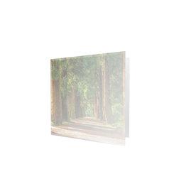 Familycards - Nova Memoria Rouwkaart - naaldbomen - vierkant