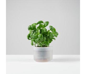 Boskke Till Planter Single 12 cm clear