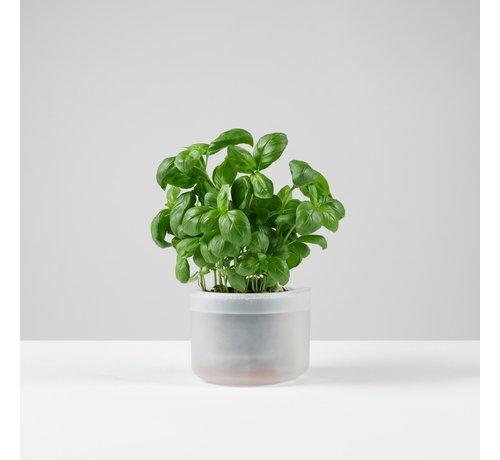 Boskke Till Planter Single small 12 cm clear