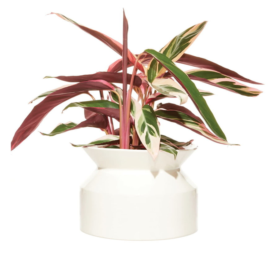 Boskke Spool Planter Keramik Pflanzgefäß Weiß Groß