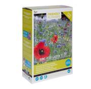 Buzzy Grow Gifts Friendly Flowers XL Heimische Blumenmischung 50m²