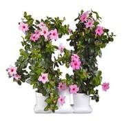 Minigarden Basic M Pots Blumentopf Weiß