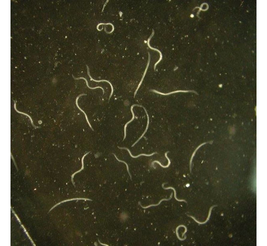 Biogroei Stenema Nematoden gegen Pilzmückenlarven
