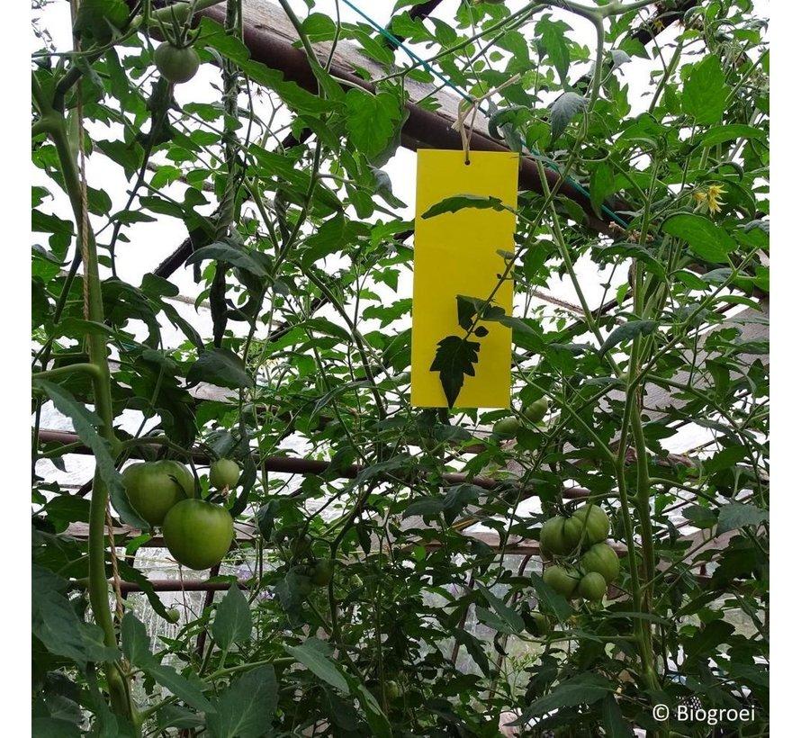 Biogroei Gelbe Fangstreifen 25 x 40 cm 20 Streifen