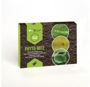 Biogroei Phyto-Mite Phytoseiulus Raubmilben gegen grüne Spinnmilben