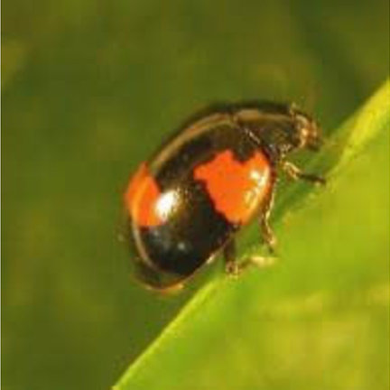 Nützliche Insekten