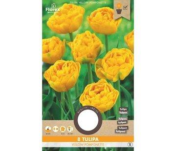 Florex Tulpe Yellow Pomponette Gelb Blumenzwiebeln 8 Stk.