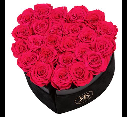 Rosuz Flowerbox Longlife Mary J Rosa