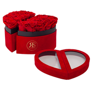 Rosuz Flowerbox Longlife Scarlet Rot