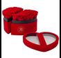 Flowerbox Longlife Scarlet Rot