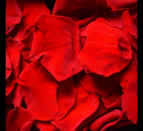Rosuz Rosenblüten Longlife Rot 25GR