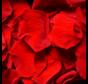 Rosenblüten Longlife Rot 25GR